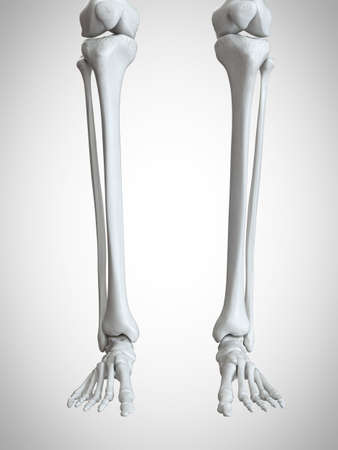 3d rendered medically accurate illustration of the lower leg and foot bones Stock Illustration - 108640724