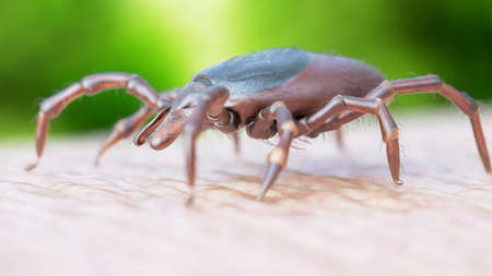 3d rendered illustration of a tick crawling on human skin