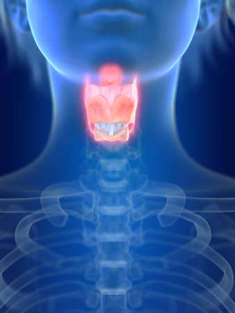3d rendered medically accurate illustration of an inflamed larynx Stock Photo