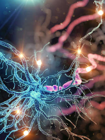 3d rendered medically accurate illustration of an active human nerve cell