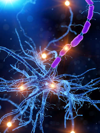3d rendered medically accurate illustration of an active human nerve cell Archivio Fotografico - 109014926
