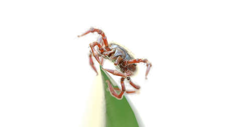 3d rendered illustration of a tick waiting on a grass blade Stock Photo