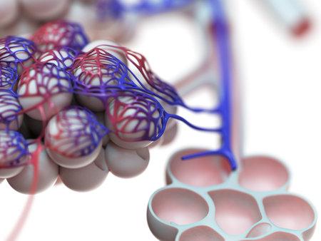 Illustration de rendu 3D des alvéoles humaines