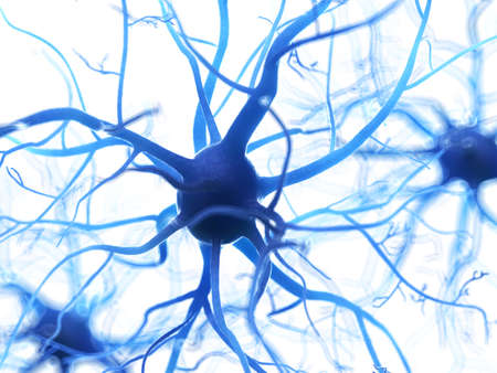 3d rendered medically accurate illustration of a human nerve cell Imagens