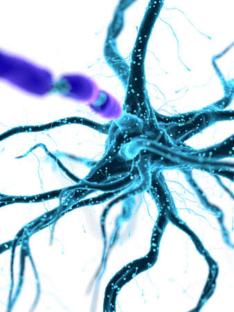 3d rendered medically accurate illustration of an human nerve cell Stock Photo
