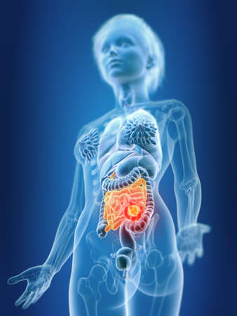 3d rendered medically accurate illustration of a females small intestine Stock Photo