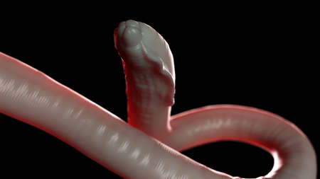 3d rendered medically accurate illustration of a round worm