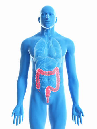 3d rendered medically accurate illustration of a mans colon Foto de archivo