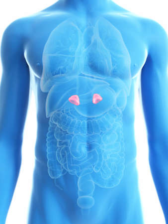 3d rendered medically accurate illustration of a mans adrenal glands