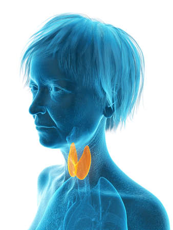 3d rendered medically accurate illustration of an elder females thyroid gland