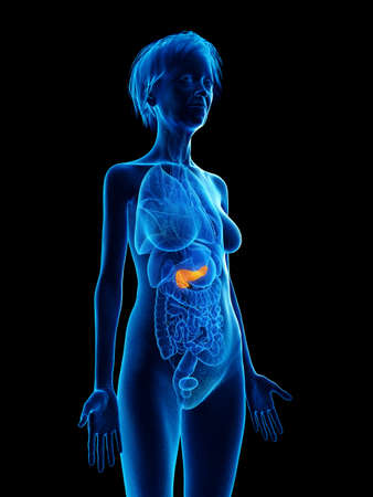 3d rendered medically accurate illustration of an elder females pancreas Stock Photo