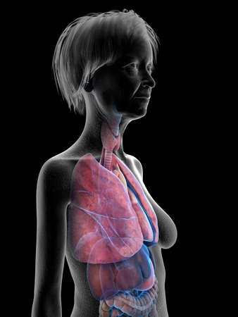 3d rendered medically accurate illustration of an elder females lung Stock Illustration - 110592568