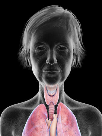3d rendered medically accurate illustration of an elder females throat anatomy