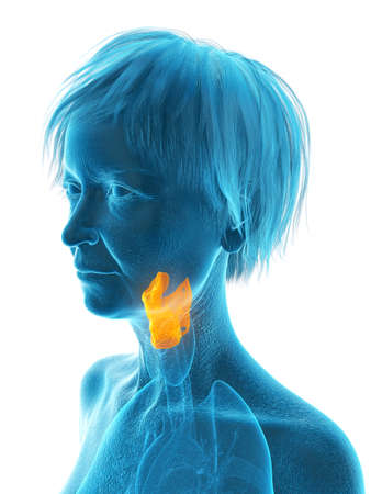 3d rendered medically accurate illustration of an elder females larynx Stock Photo