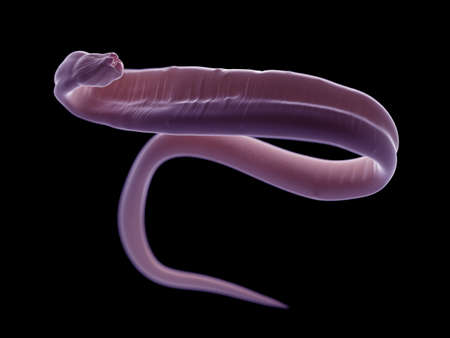 3d rendered illustration of an ascariasis worm Stock Photo