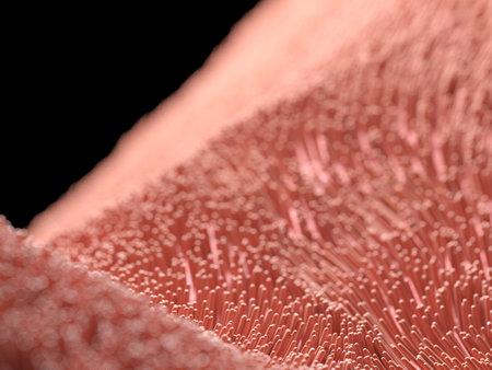 3d rendered illustration of human cilia Stok Fotoğraf