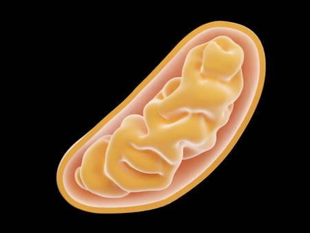 3d rendered illustration of a mitochondria