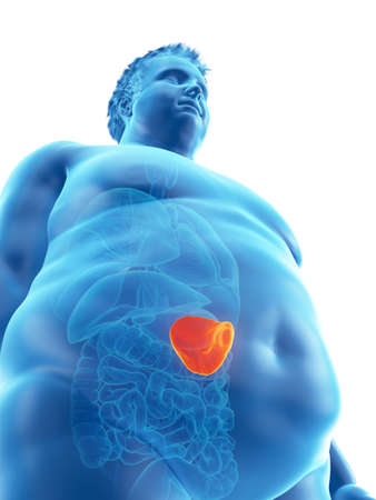 3d rendered medically accurate illustration of an obese mans spleen