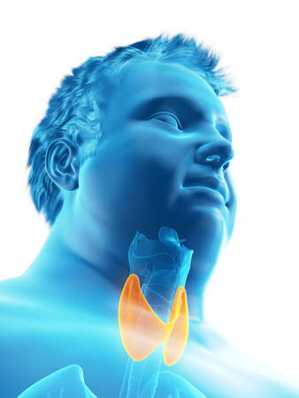 3d rendered medically accurate illustration of an obese mans thyroid gland Stock Photo