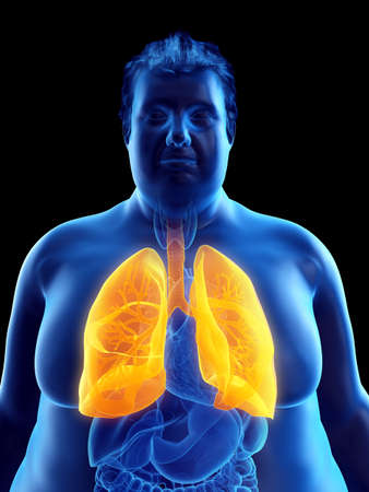 3d rendered medically accurate illustration of an obese mans lungs Stock Photo