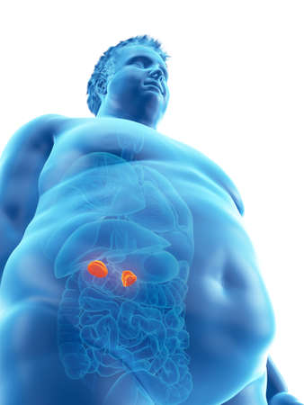 3d rendered medically accurate illustration of an obese mans adrenal glands