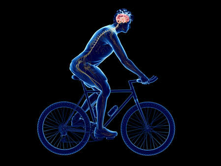 3d rendered illustration of a cyclists brain Stock Photo