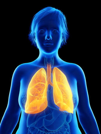 3d rendered medically accurate illustration of an obese womans lung