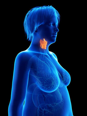 3d rendered medically accurate illustration of an obese womans larynx Stock Illustration - 111695258