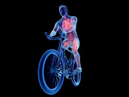 3d rendered illustration of a cyclists anatomy