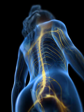 3d rendered medically accurate illustration of a womans spinal cord Stockfoto - 113507951