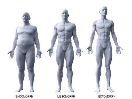3d rindió la ilustración médicamente exacta de los tipos de cuerpo masculino