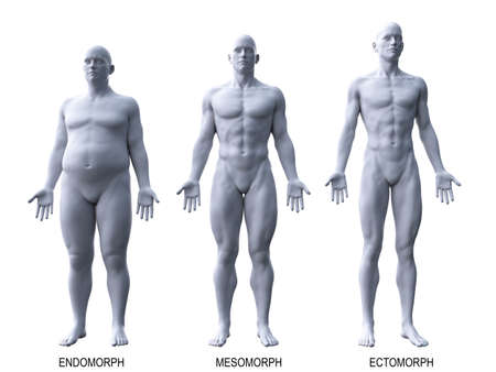 Illustration médicalement précise en rendu 3D des types de corps masculins