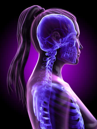 3d rendered medically accurate illustration of a womans skeletal neck Stockfoto