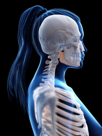 3d rendered medically accurate illustration of a womans skeletal neck