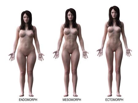 3d rindió la ilustración médicamente exacta de los tipos de cuerpo femenino