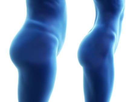 3d rendered medically accurate illustration of a big and a small female butt Stock Photo