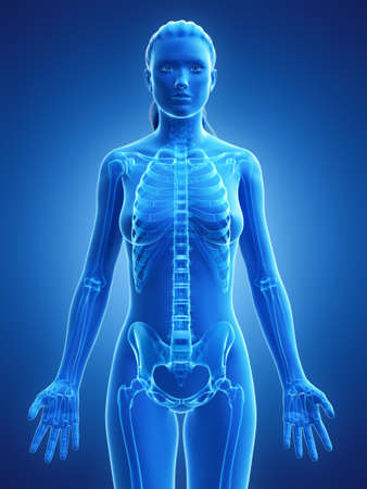 3d rendered medically accurate illustration of a womans skeleton