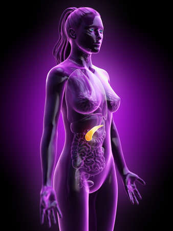 3d rendered medically accurate illustration of a females pancreas Stock Photo
