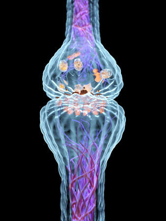 3d rendered medically accurate illustration of the synapse anatomy Stock Photo