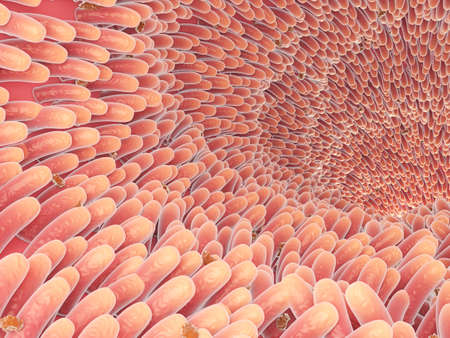 3d rendered medically accurate illustration of intestinal villis