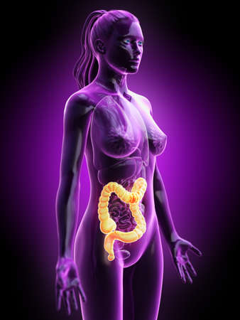 3d rendered medically accurate illustration of a females colon Stock Illustration - 113508652