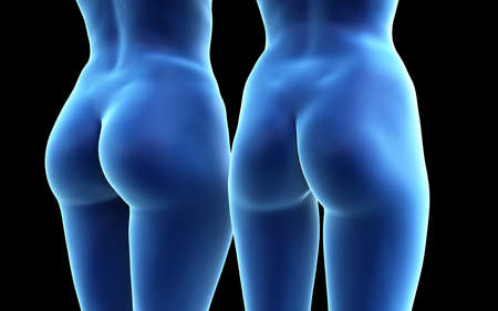 3d rendered medically accurate illustration of a big and a small female butt Standard-Bild