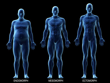3d rendered medically accurate illustration of the male body types Standard-Bild - 113508720
