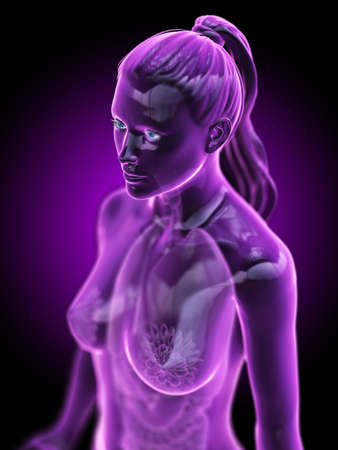3d rendered medically accurate illustration of the female anatomy