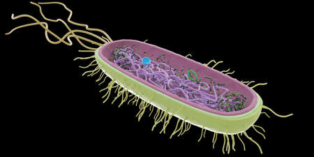 3d rendered medically accurate illustration of the bacteria anatomy
