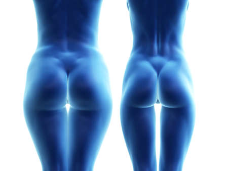 3d rendered medically accurate illustration of a big and a small female butt Stok Fotoğraf