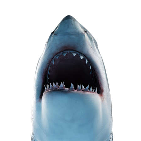 3d rendered illustration of a great white shark Stock Photo