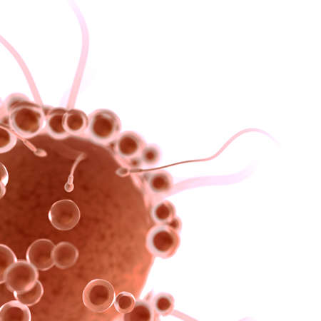3d rendered illustration of a swarm of sperms trying to fertilize a human egg cell