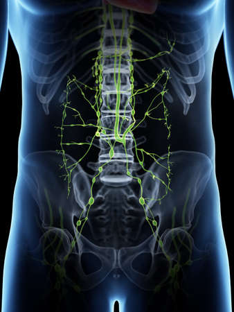 3d rendered medically accurate illustration of the abdominal lymphatic system