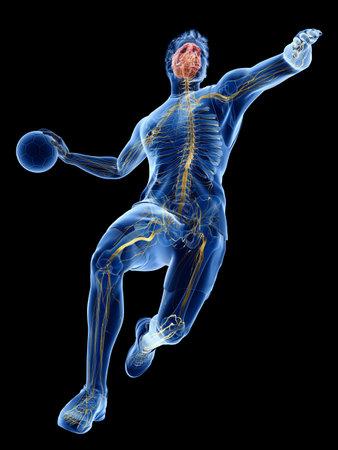 3D-gerenderte medizinisch genaue Darstellung der Nerven eines Handballspielers
